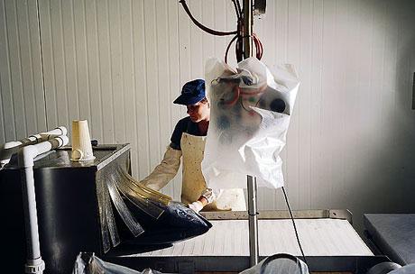 Bir 'ton balığı' hikayesi galerisi resim 13