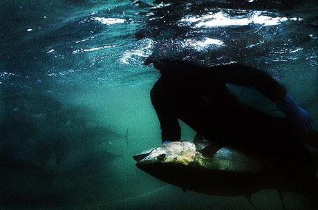 Bir 'ton balığı' hikayesi galerisi resim 6