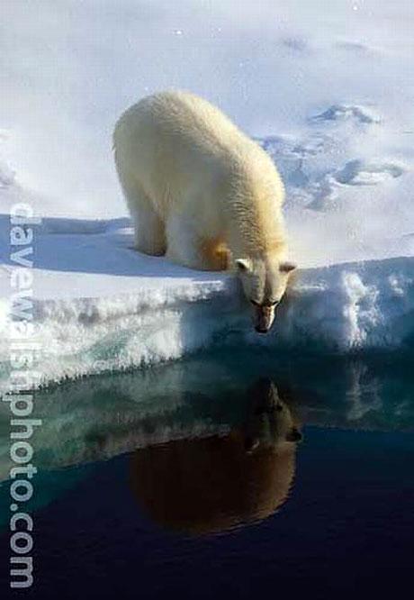 Petermann buzulu böyle eriyor galerisi resim 22