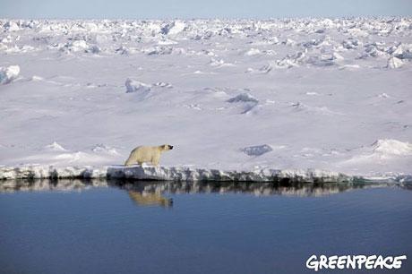 Petermann buzulu böyle eriyor galerisi resim 23