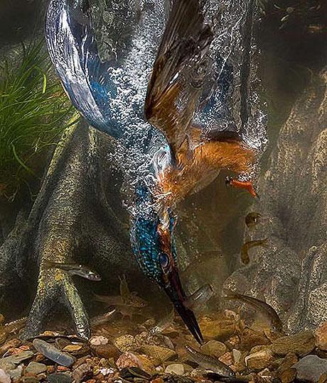 Özgürlüğe kanat çırpanlar! galerisi resim 1