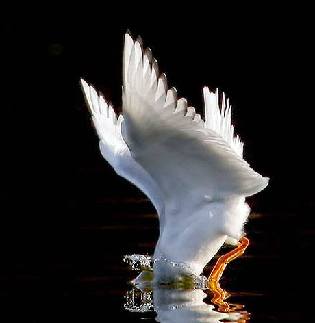 Özgürlüğe kanat çırpanlar! galerisi resim 19