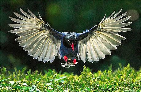 Özgürlüğe kanat çırpanlar! galerisi resim 21