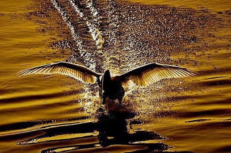 Özgürlüğe kanat çırpanlar! galerisi resim 9