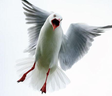 Kuşların dünyasına yolculuk galerisi resim 4