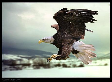 Kuşların dünyasına yolculuk galerisi resim 5