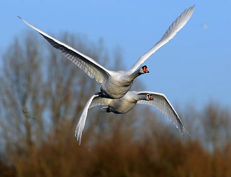 Kuşların dünyasına yolculuk galerisi resim 6