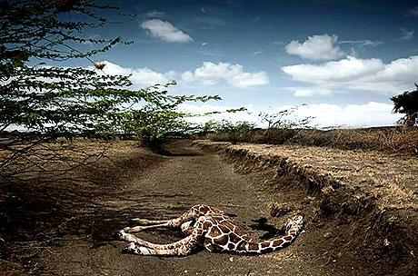 Time seçti: 2009'un en etkili fotoğrafları galerisi resim 16