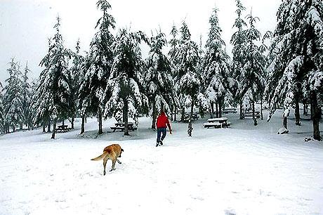 Yurttan kar manzaraları... galerisi resim 4