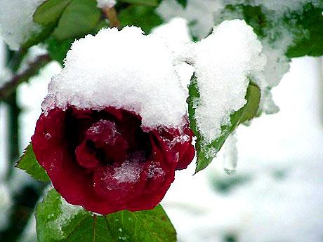 Yurttan kar manzaraları... galerisi resim 6