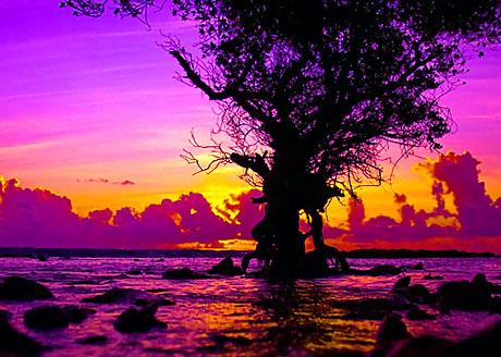 Hayatın Renkleri! galerisi resim 13
