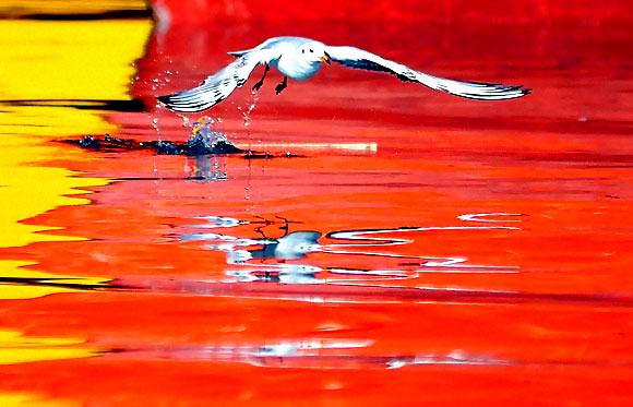 Martı'ların deniz'le dansı... galerisi resim 10