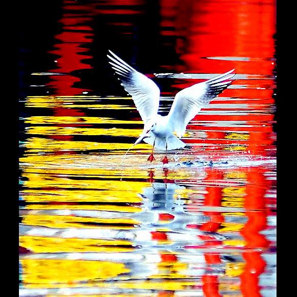 Martı'ların deniz'le dansı... galerisi resim 11