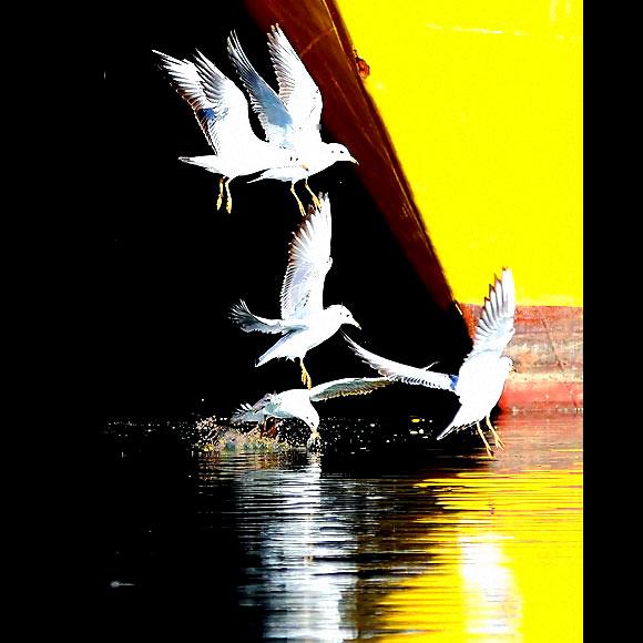 Martı'ların deniz'le dansı... galerisi resim 17