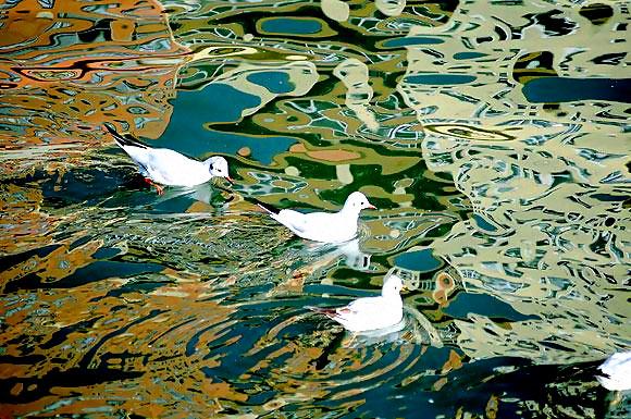Martı'ların deniz'le dansı... galerisi resim 26