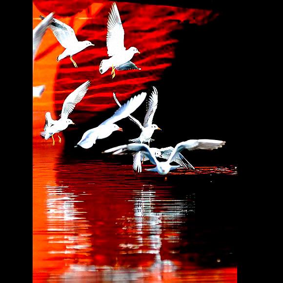 Martı'ların deniz'le dansı... galerisi resim 30