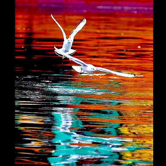 Martı'ların deniz'le dansı... galerisi resim 8