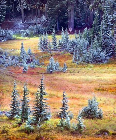 Muhteşem doğa fotoğrafları galerisi resim 10