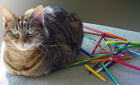 En güzel Kedi resimleri galerisi resim 10
