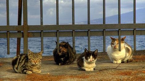 En güzel Kedi resimleri galerisi resim 2