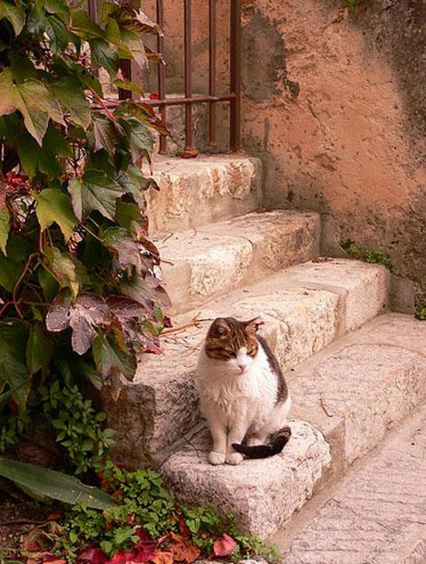 En güzel Kedi resimleri galerisi resim 6