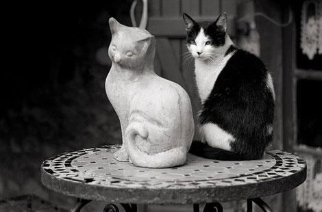 En güzel Kedi resimleri galerisi resim 8