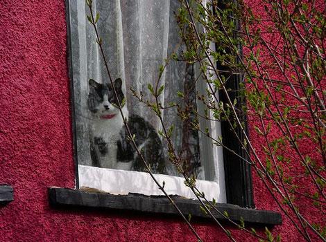 En güzel Kedi resimleri galerisi resim 9