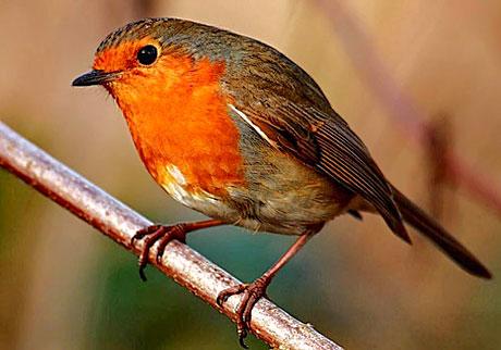 Muhteşem hayvan fotoğrafları galerisi resim 12