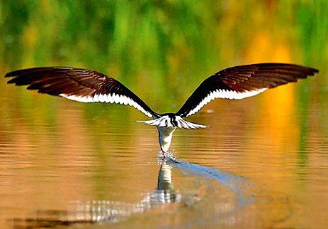 Muhteşem hayvan fotoğrafları galerisi resim 14