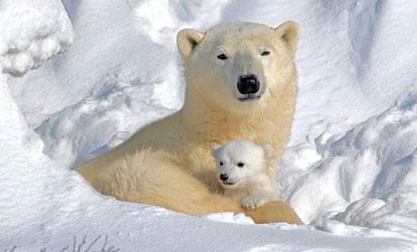 Muhteşem hayvan fotoğrafları galerisi resim 18