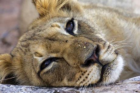 Muhteşem hayvan fotoğrafları galerisi resim 2