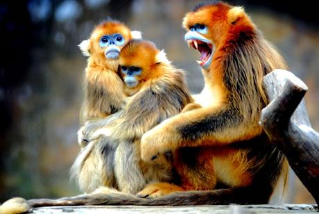 Muhteşem hayvan fotoğrafları galerisi resim 22