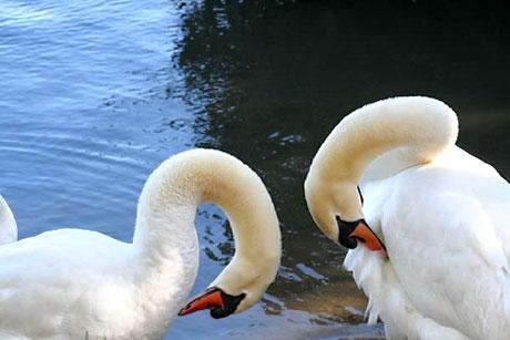Muhteşem hayvan fotoğrafları galerisi resim 26