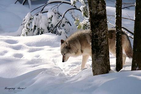 Muhteşem hayvan fotoğrafları galerisi resim 27
