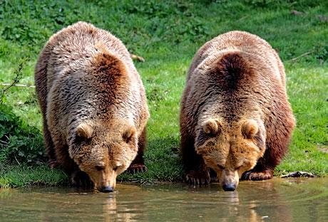 Muhteşem hayvan fotoğrafları galerisi resim 28