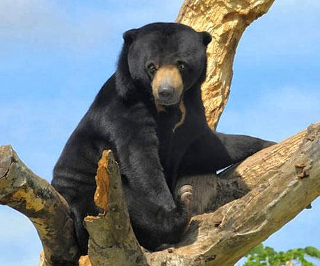 Muhteşem hayvan fotoğrafları galerisi resim 29