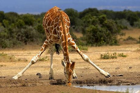 Muhteşem hayvan fotoğrafları galerisi resim 30