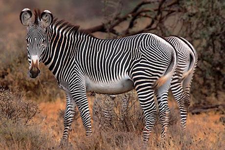 Muhteşem hayvan fotoğrafları galerisi resim 32
