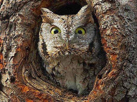 Muhteşem hayvan fotoğrafları galerisi resim 4