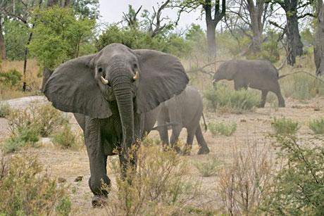 Muhteşem hayvan fotoğrafları galerisi resim 5
