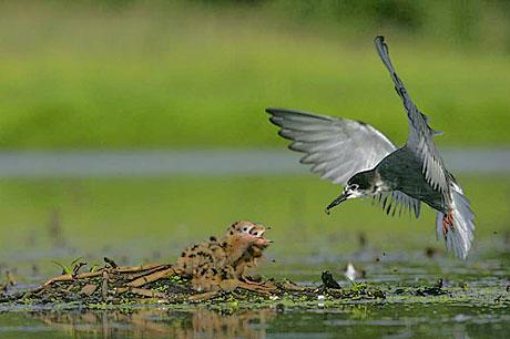 Muhteşem hayvan fotoğrafları galerisi resim 8