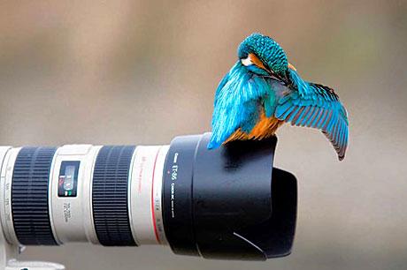 Muhteşem hayvan fotoğrafları galerisi resim 9
