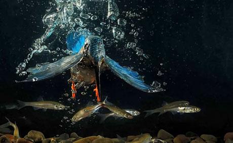 2010'un en vahşi fotoğrafları galerisi resim 2