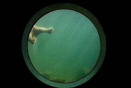 2010'un en vahşi fotoğrafları galerisi resim 6