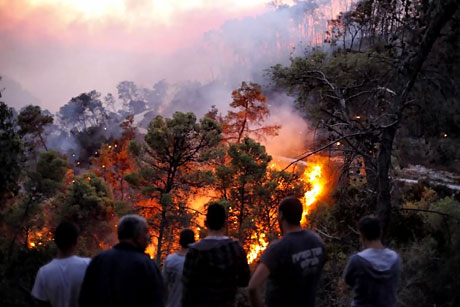 Yangın İsrail'i bu hale getirdi galerisi resim 14