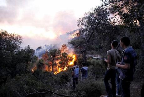 Yangın İsrail'i bu hale getirdi galerisi resim 8