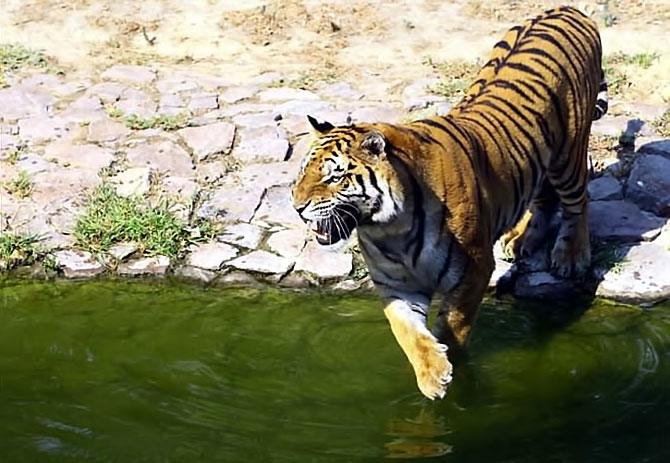Bunalan hayvanlara yaz menüsü galerisi resim 13