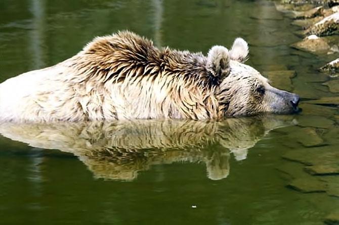 Bunalan hayvanlara yaz menüsü galerisi resim 4