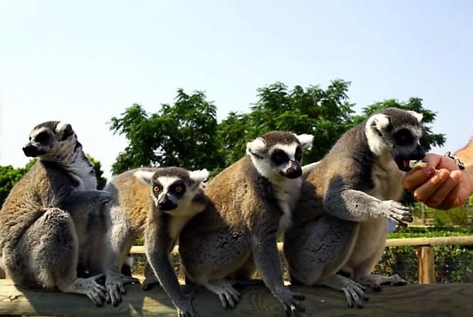 Bunalan hayvanlara yaz menüsü galerisi resim 8