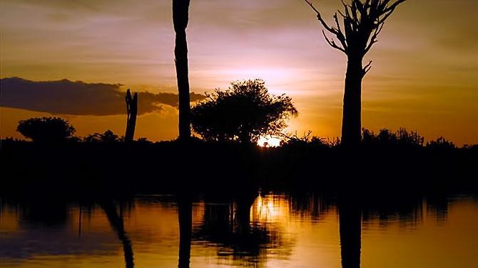 Vahşi Amazon galerisi resim 13
